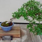 The bonsai are my favorite