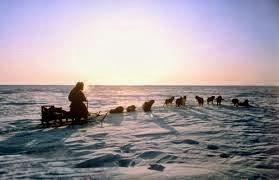 North pole Dog sled
